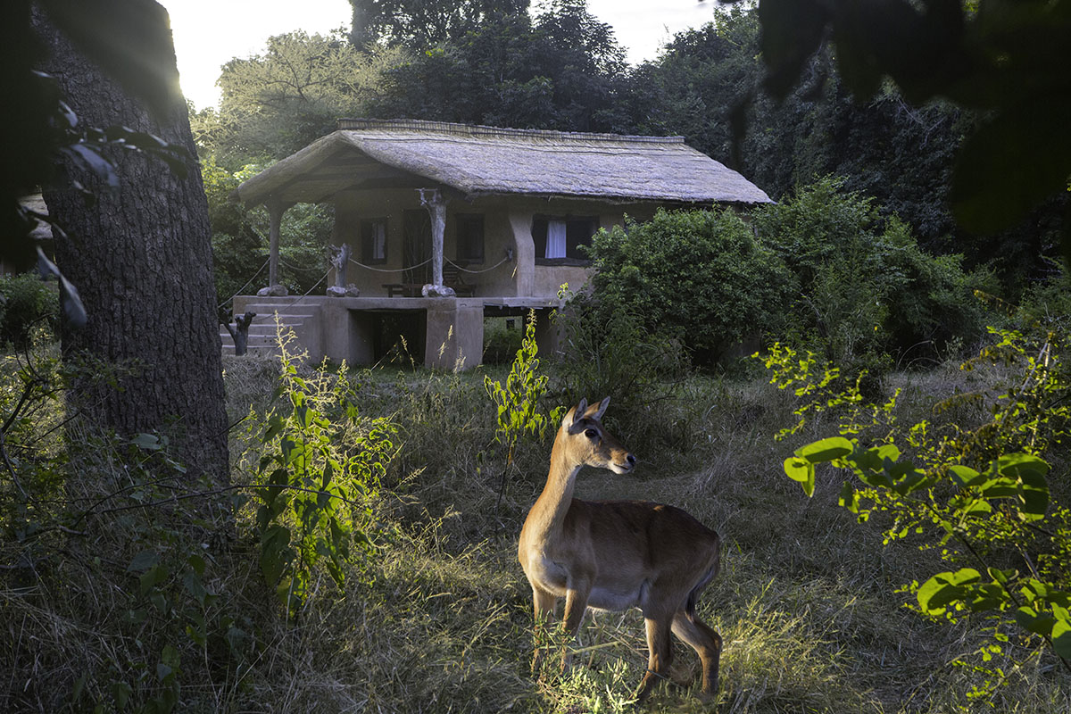 track and trail zambia-in-style-tours-safari-lodges-south-luangwa-mfuwe-rooms-wildlife