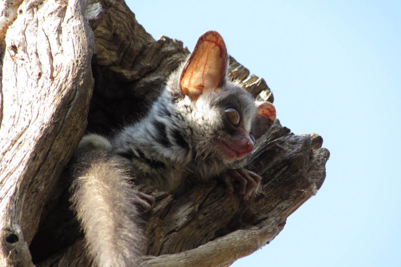 changa safari camp lake-kariba-zimbabwe-zambia-in-style-authentic-safari-experience-bushbaby