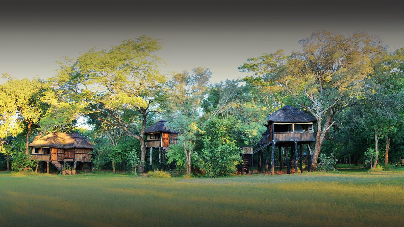 ivory lodge zimbabwe-lodges-zambia-in-style-safaris-wildlife-africa-hwange-national-the-amalinda-collection-trees