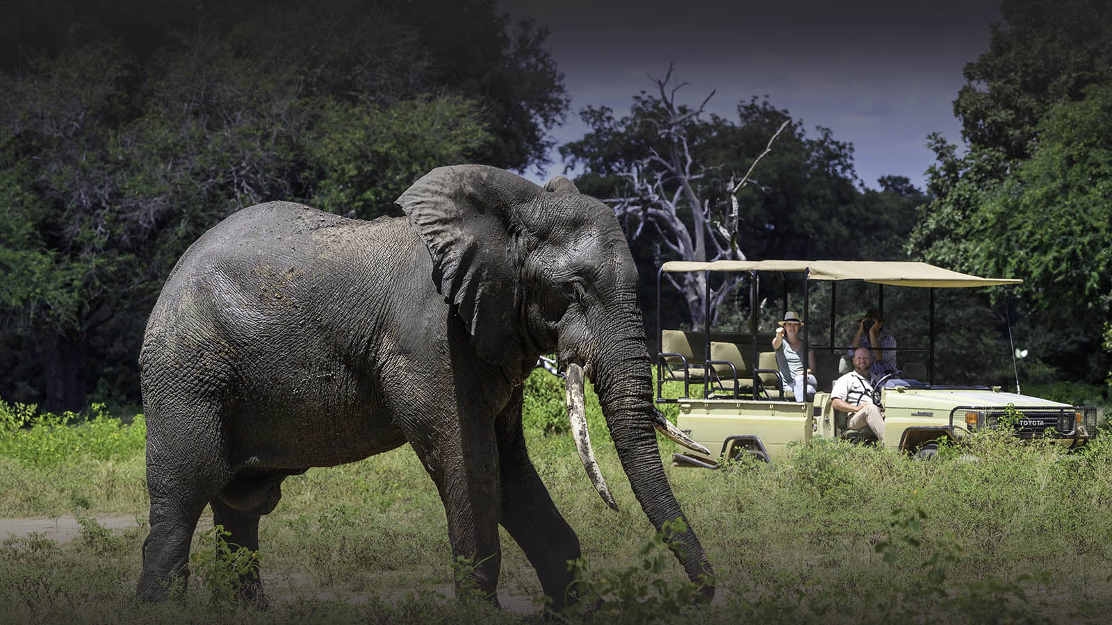 johns camp mana-pools-zimbabwe-accommodation-safari-zambia-in-style-elephant-game-drive