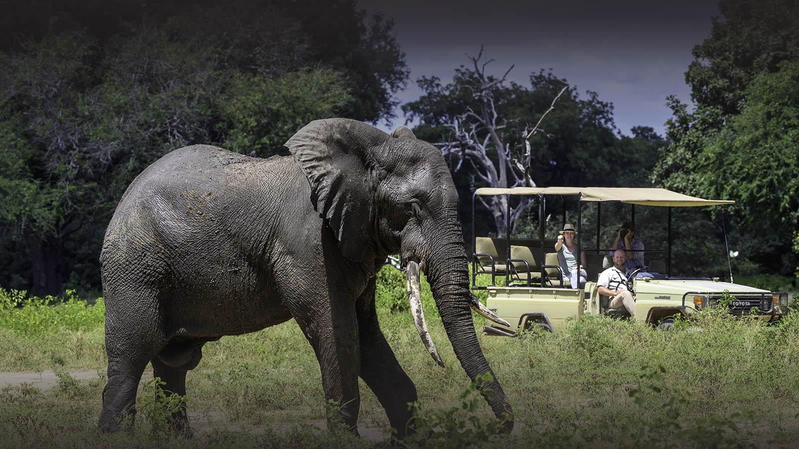 johns camp mana-pools-zimbabwe-accommodation-safari-zambia-in-style-elephant-game-drive