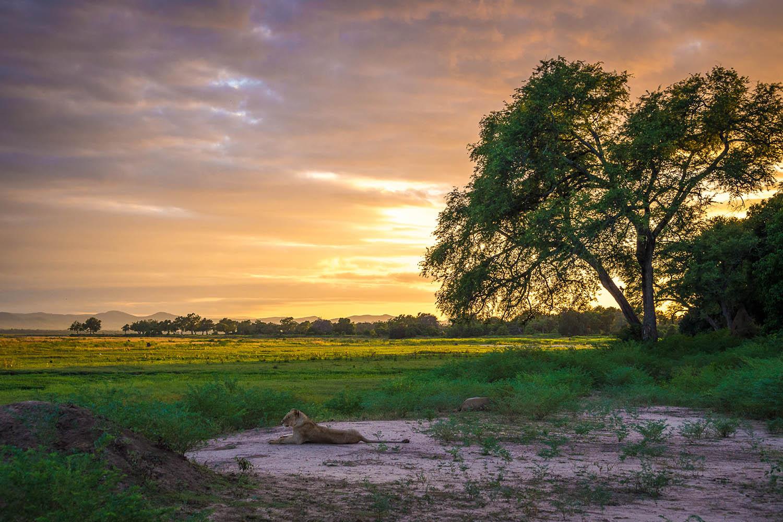 johns camp mana-pools-zimbabwe-accommodation-safari-zambia-in-style-lions-landscape