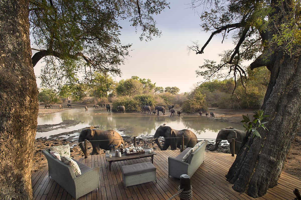 kanga bush camp mana-pools-zambia-in-style-zimbabwe-lodges-elephants-walking-past-the-main-deck