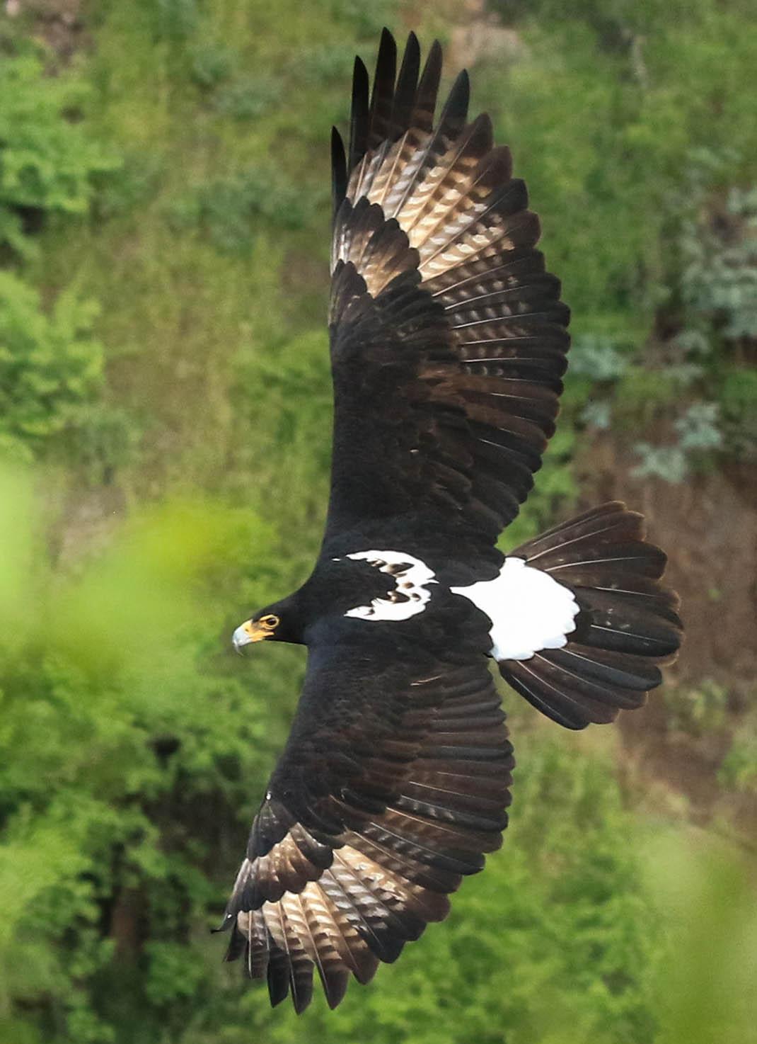 little gorges tented lodge imvelo-victoria-falls-zimbabwe-accommodation-flying-black-eagle
