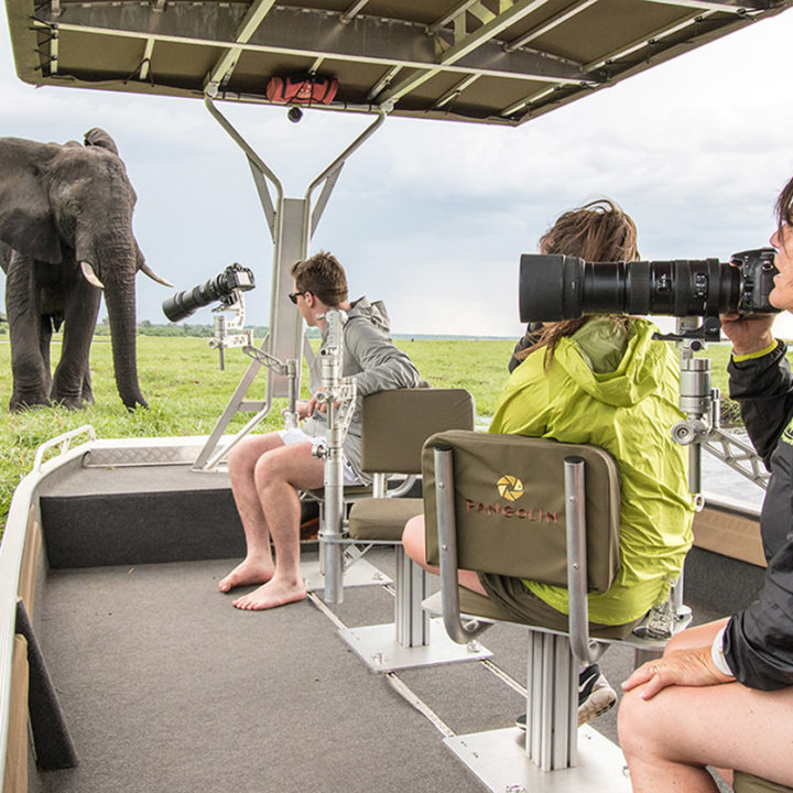 pangolin chobe hotel botswana-lodges-zambia-in-style-kasane-safaris-wildlife-africa-photography-elephant