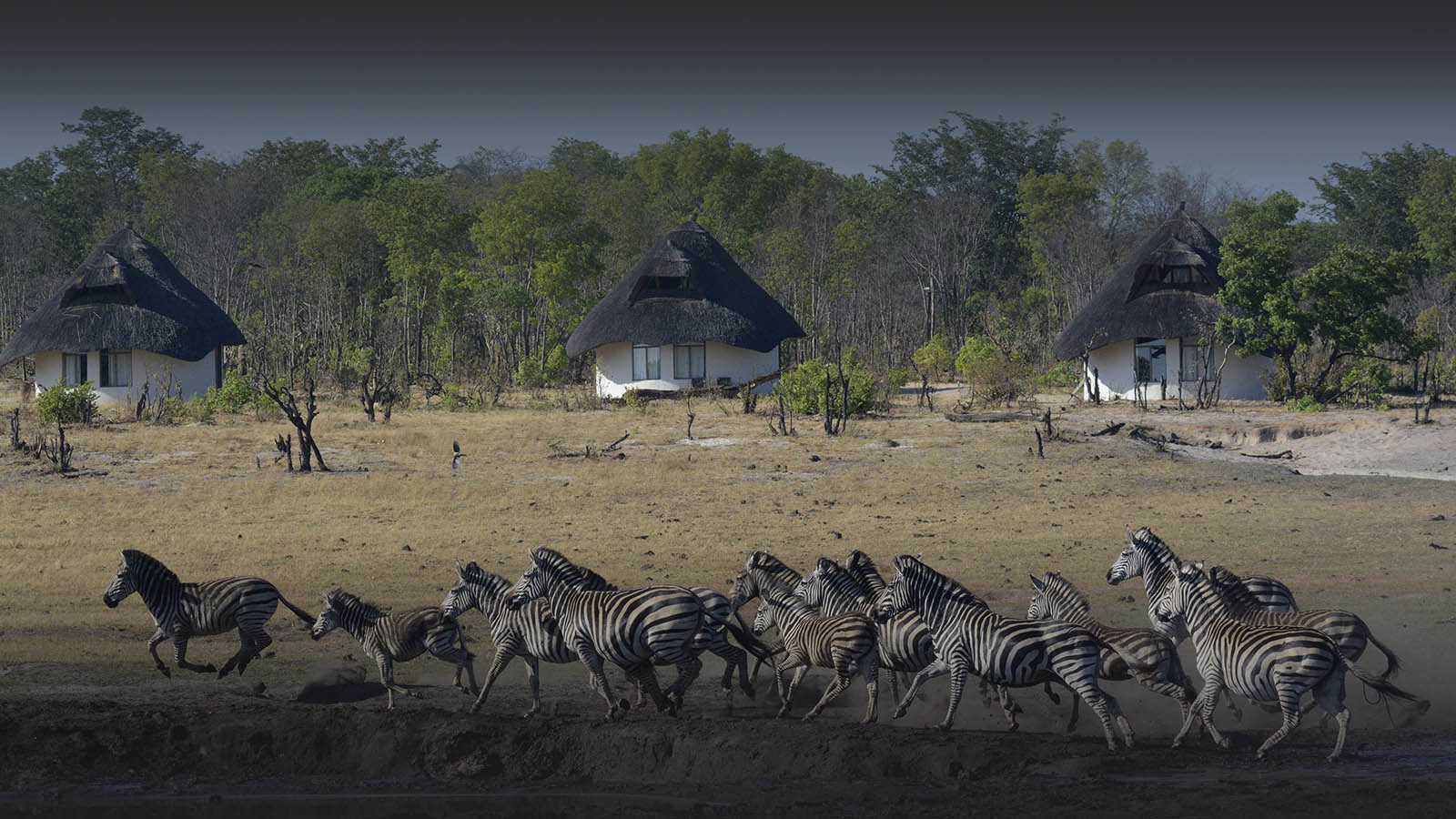 sable sands zimbabwe-lodges-zambia-in-style-safaris-wildlife-africa-hwange-national-park-zebra-dry-season