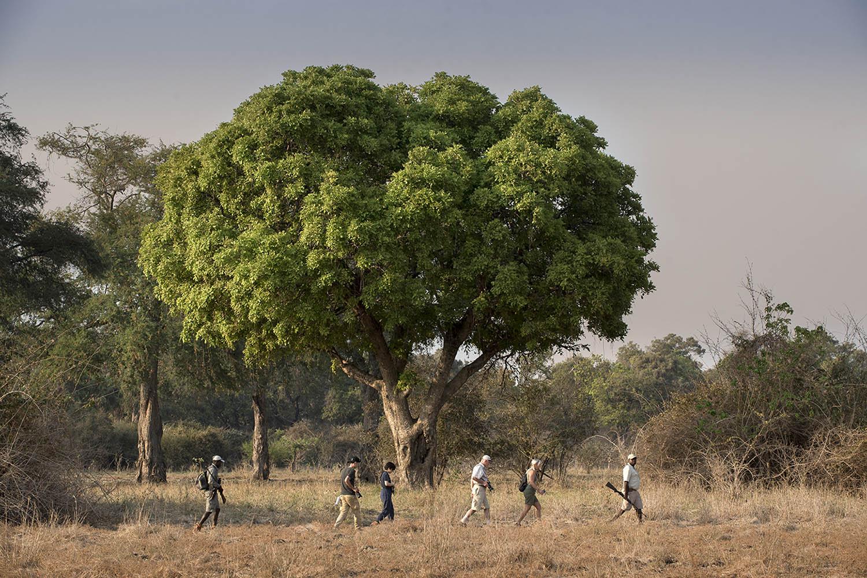 zambezi expeditions mana-pools-national-park-lodges-zimbabwe-accommodation-african-bush-camps-professional-guides-trees