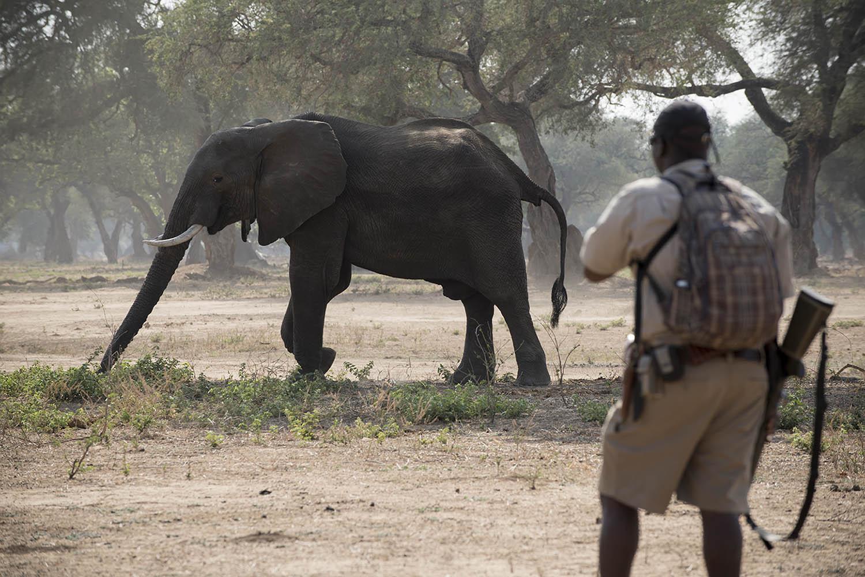 zambezi expeditions mana-pools-national-park-lodges-zimbabwe-african-bush-camps-elephant-safari-guide