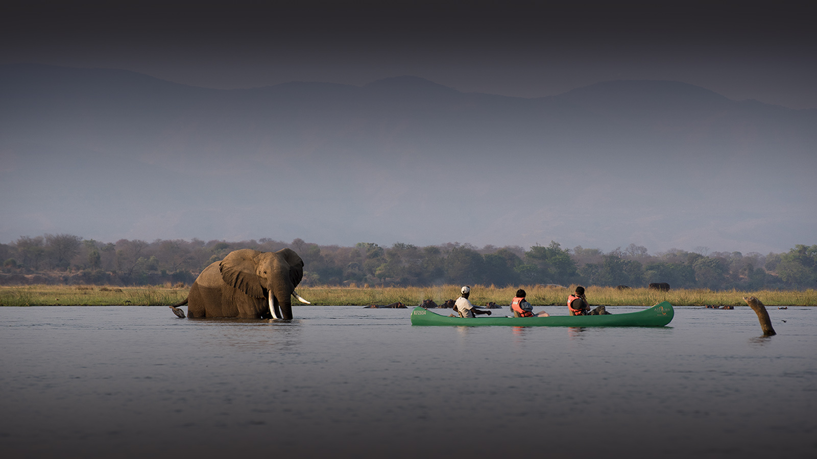 zambezi expeditions mana-pools-national-park-lodges-zimbabwe-safaris-african-bush-camps-elephant-in-water