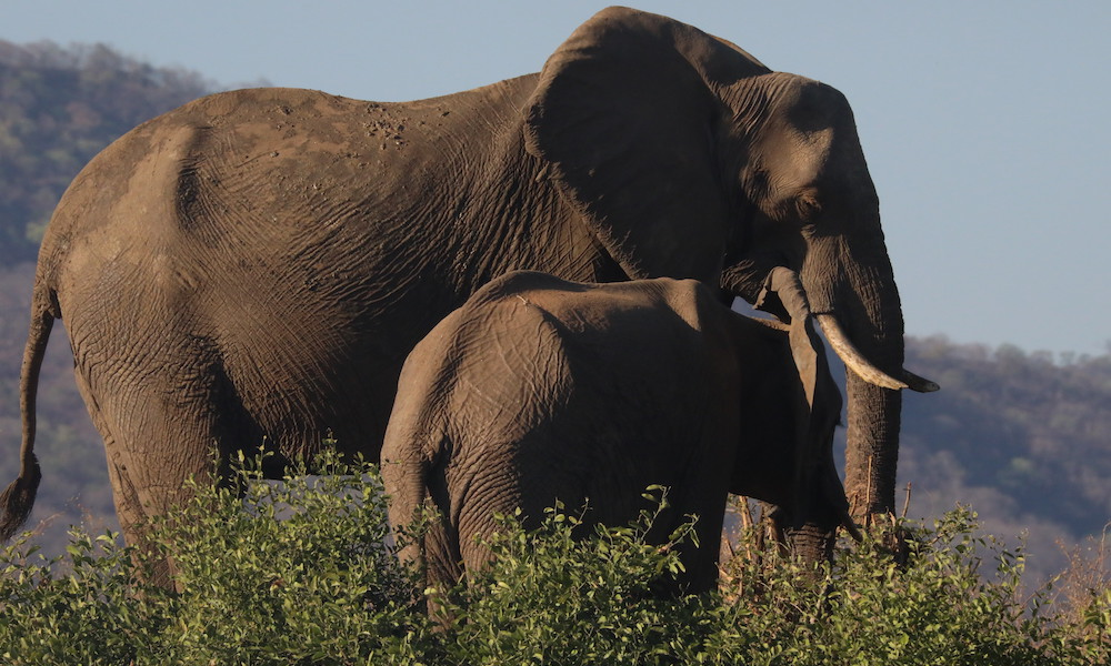 elephants in rainy season