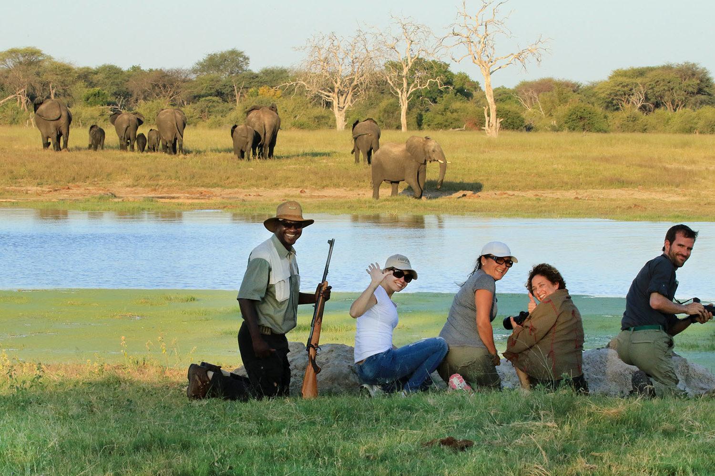 bomani tented lodge hwange-national-park-lodges-zimbabwe-accommodation-walking-safari-guide-elephants