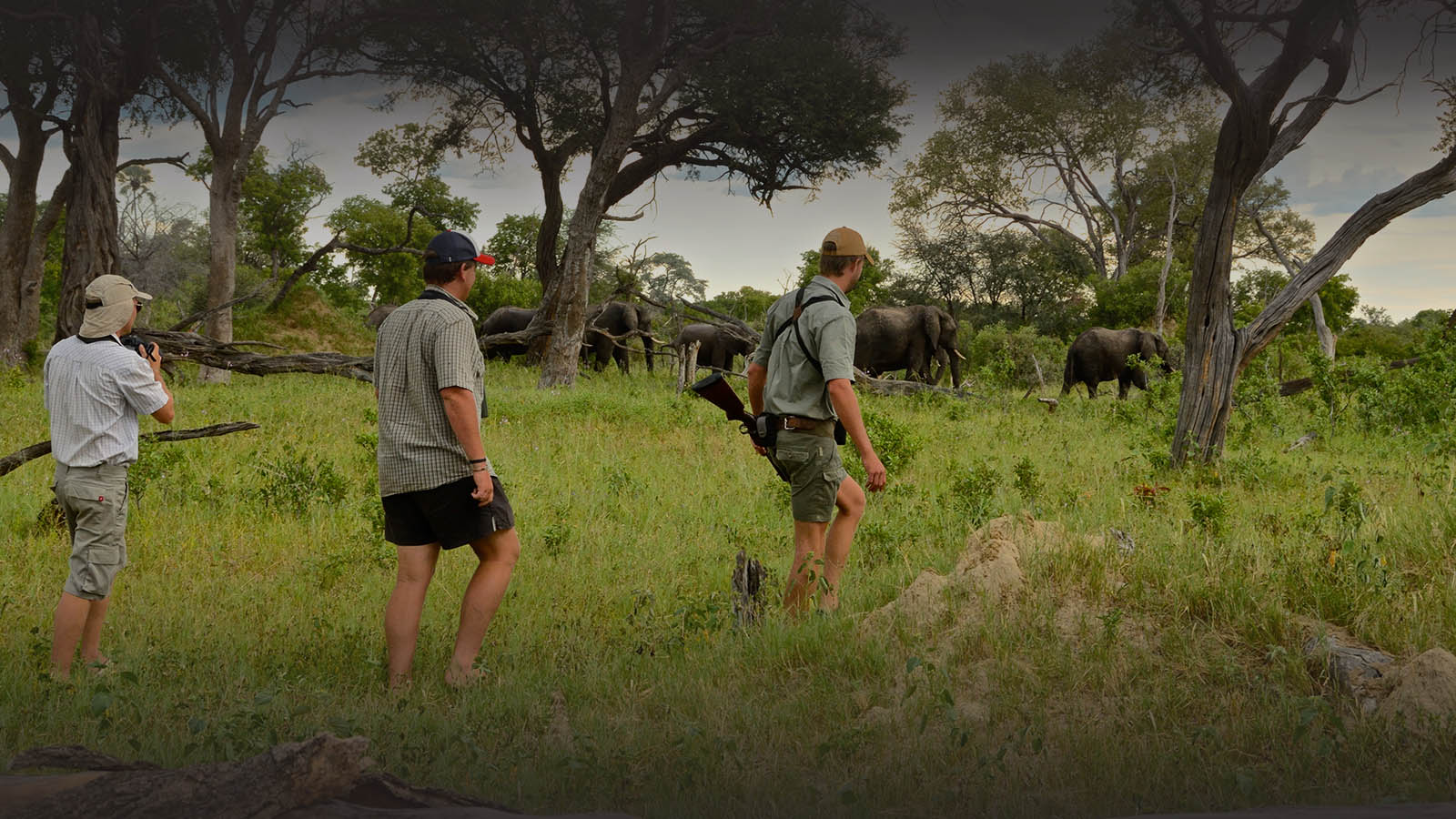 bomani tented lodge zimbabwe-accommodation-hwange-national-park-lodges-safari-walk-elephants