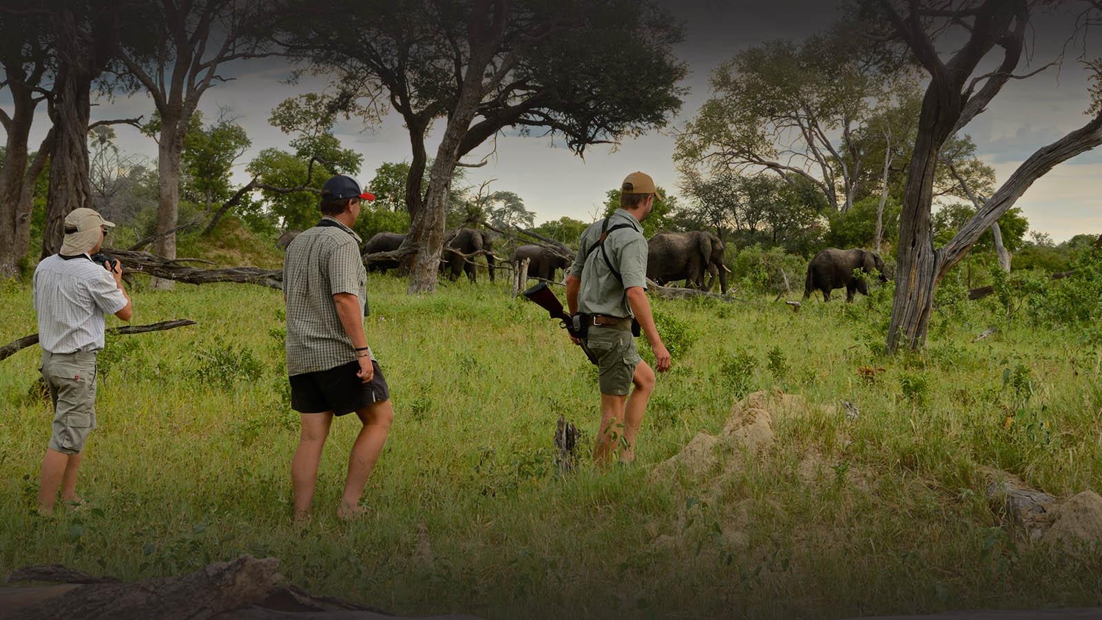 bomani tented lodge zimbabwe-accommodation-hwange-national-park-lodges-safari-walk-elephants