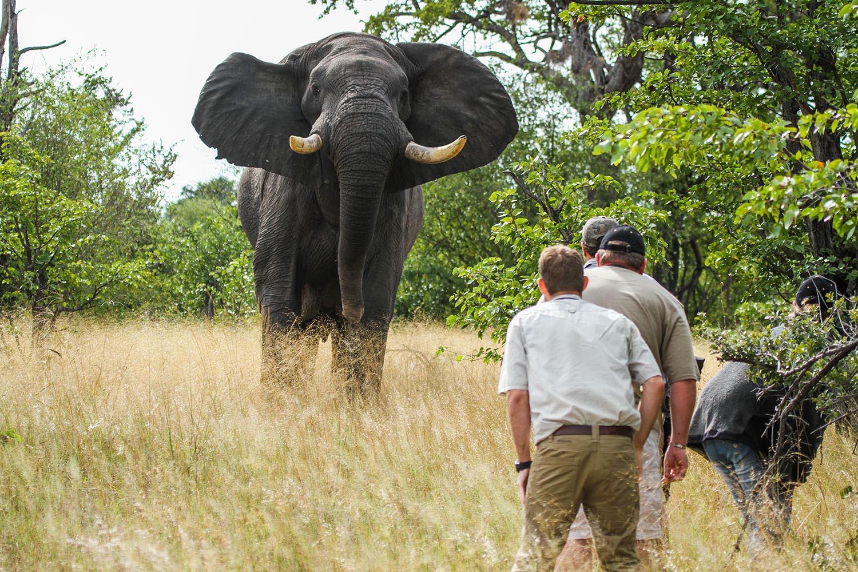 camp hwange hwange-national-park-zimbabwe-lodges-elephants-walk
