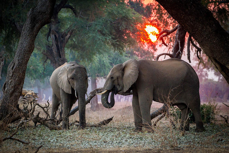 chikwenya camp zimbabwe-lodges-accommodation-zambia-in-style-mana-pools-zambezi-river-wilderness-safaris-albida-forest-elephants-sun