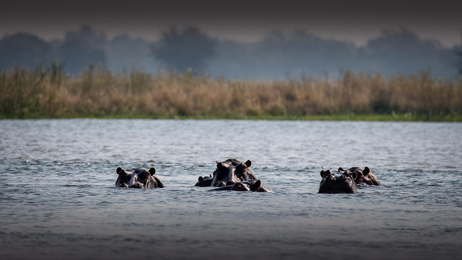 chikwenya camp zimbabwe-lodges-accommodation-zambia-in-style-mana-pools-zambezi-river-wilderness-safaris-hippo-river