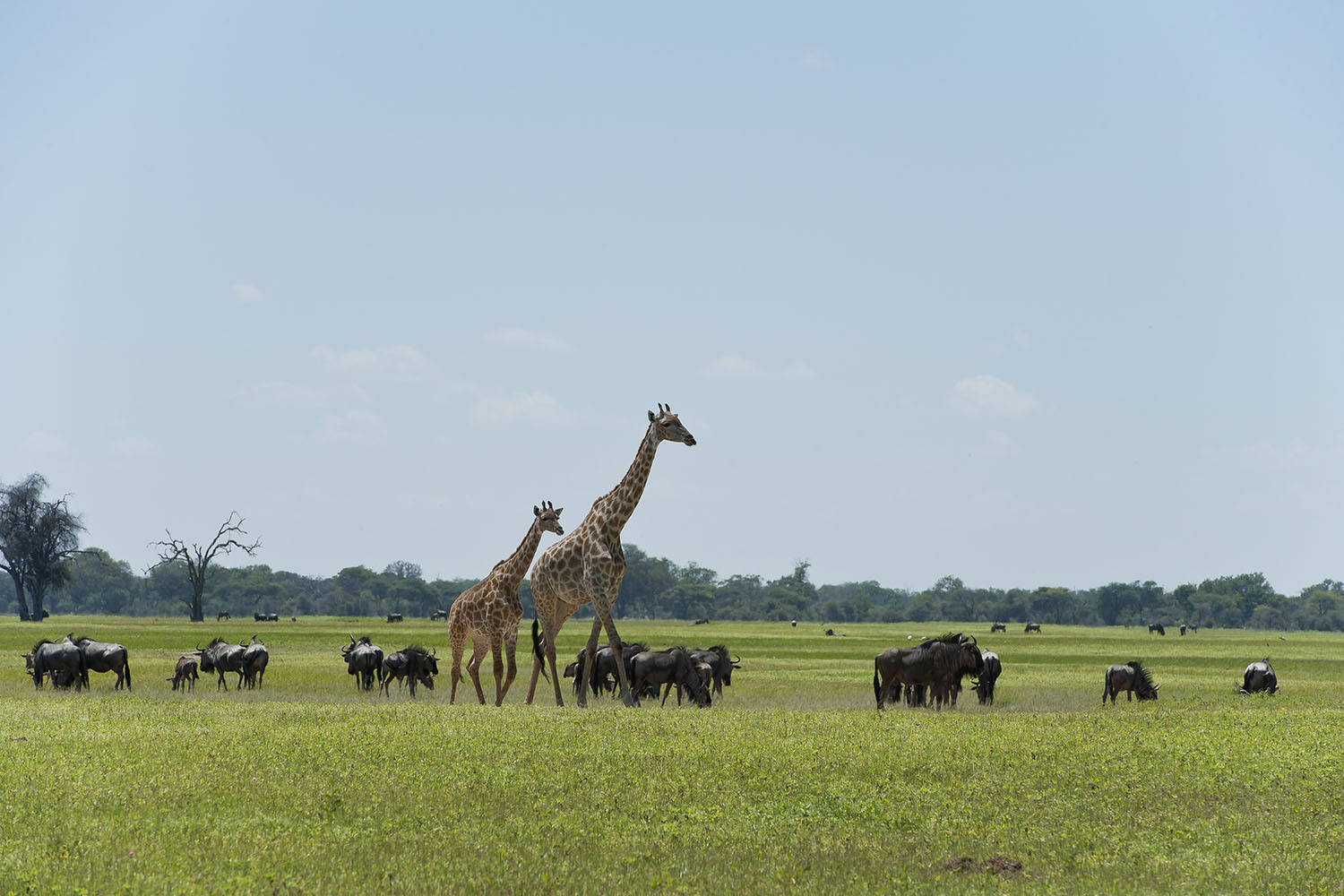 davisons camp hwange-national-park-zimbabwe-lodges-wilderness-activities-elephants-giraffe