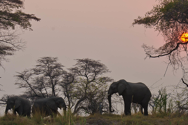 imbalala lodge victoria-falls-zambia-in-style-zimbabwe-lodges-accommodation-elephants