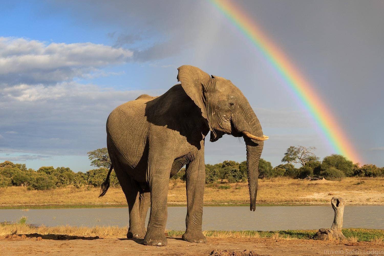 jozibanini camp hwange-national-park-zimbabwe-lodges-game-viewing-elephant-rainbow
