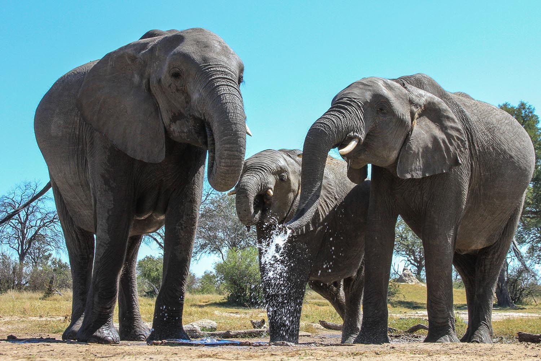 jozibanini camp hwange-national-park-zimbabwe-lodges-game-viewing-elephants-wildlife
