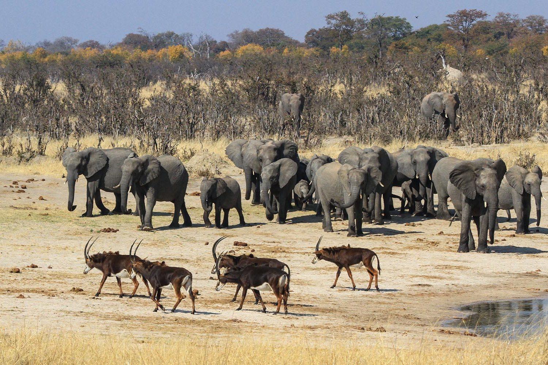 jozibanini camp hwange-national-park-zimbabwe-lodges-game-viewing-wildlife