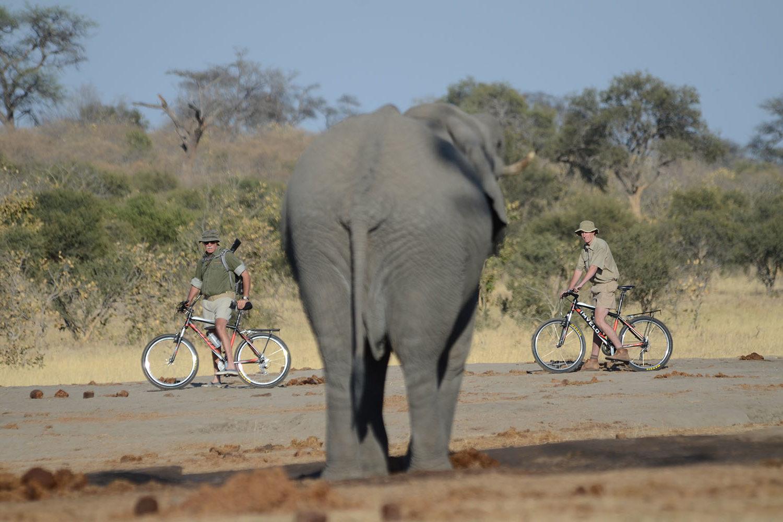 jozibanini camp hwange-national-park-zimbabwe-lodges-rustic-safari-cycling-past-elephants