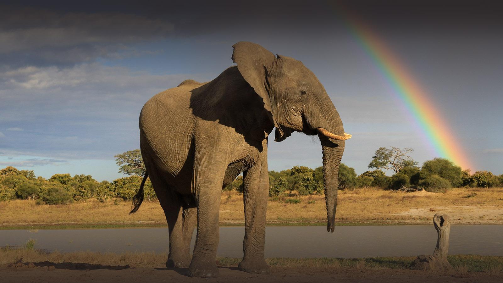 jozibanini camp hwange-national-park-zimbabwe-lodges-rustic-safaris-elephant-rainbow