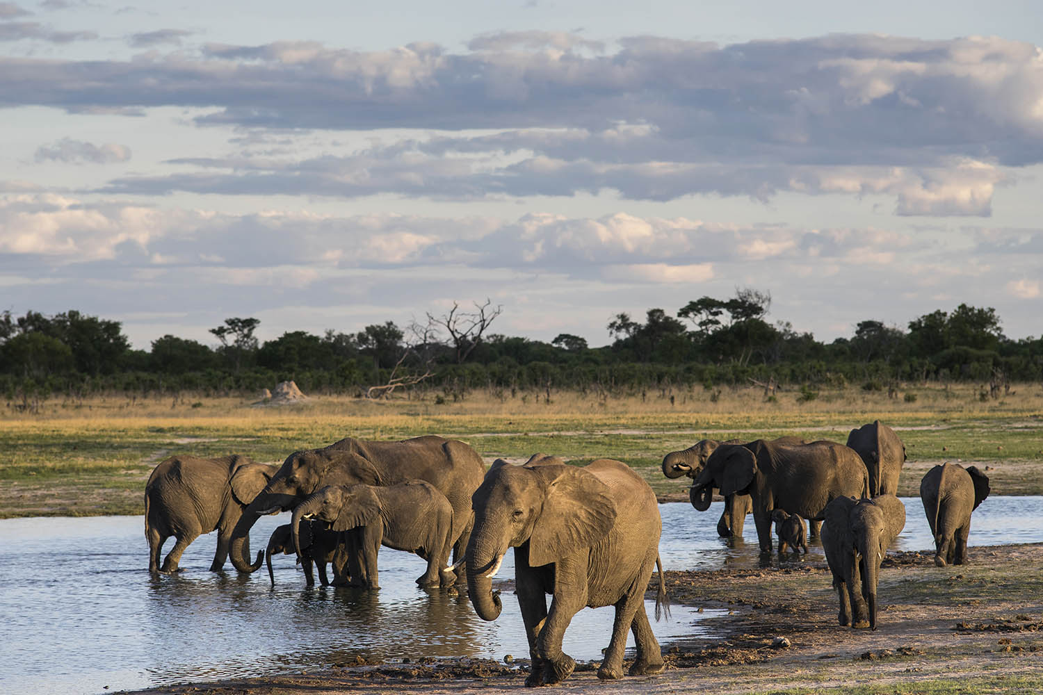 linkwasha camp hwange-national-park-zimbabwe-lodges-wildlife-elephants