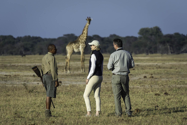 linkwasha camp hwange-national-park-zimbabwe-lodges-wildlife-walking-safari-giraffe