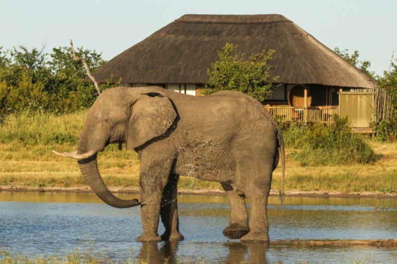 nehimba lodge imvelo-hwange-national-park-lodges-zimbabwe-accommodation-game-viewing-elephant