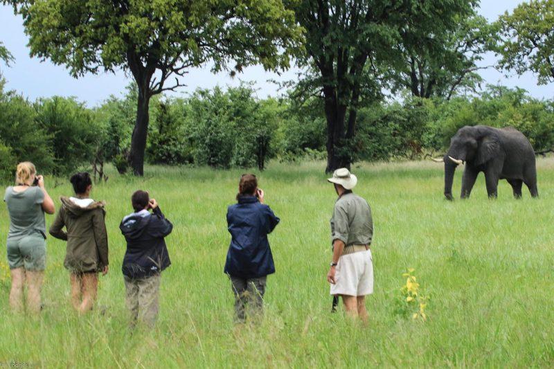 nehimba lodge imvelo-hwange-national-park-zimbabwe-accommodation-walking-safari-elephant