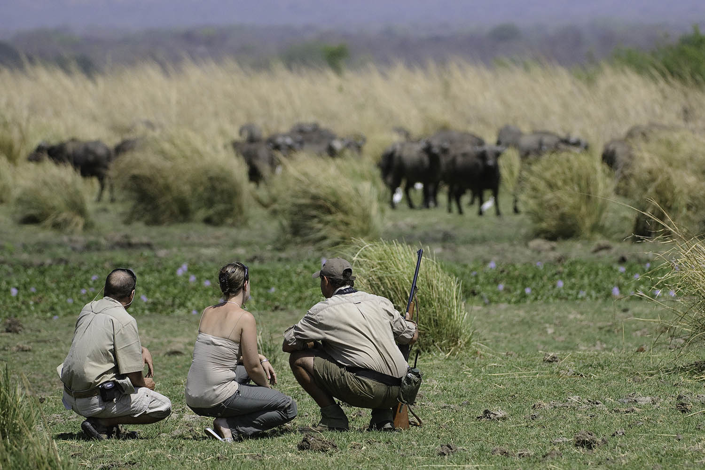 ruckomechi zimbabwe-lodges-mana-pools-zambezi-river-africa-wilderness-safaris-walking-safari