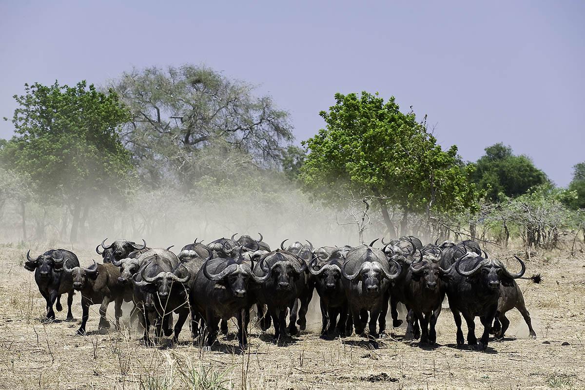 ruckomechi zimbabwe-lodges-mana-pools-zambezi-river-africa-wilderness-safaris