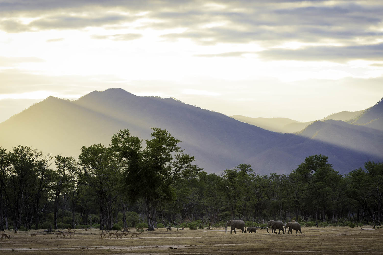 ruckomechi zimbabwe-lodges-mana-pools-zambezi-river-africa-wilderness-wildlife