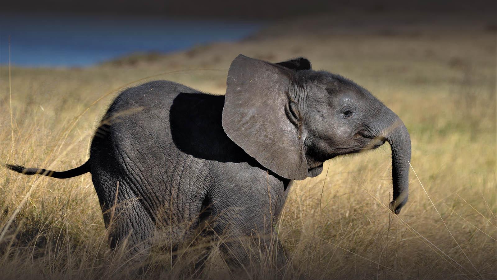 the hide hwange-national-park-lodges-zimbabwe-accommodation-baby-elephant-landscape