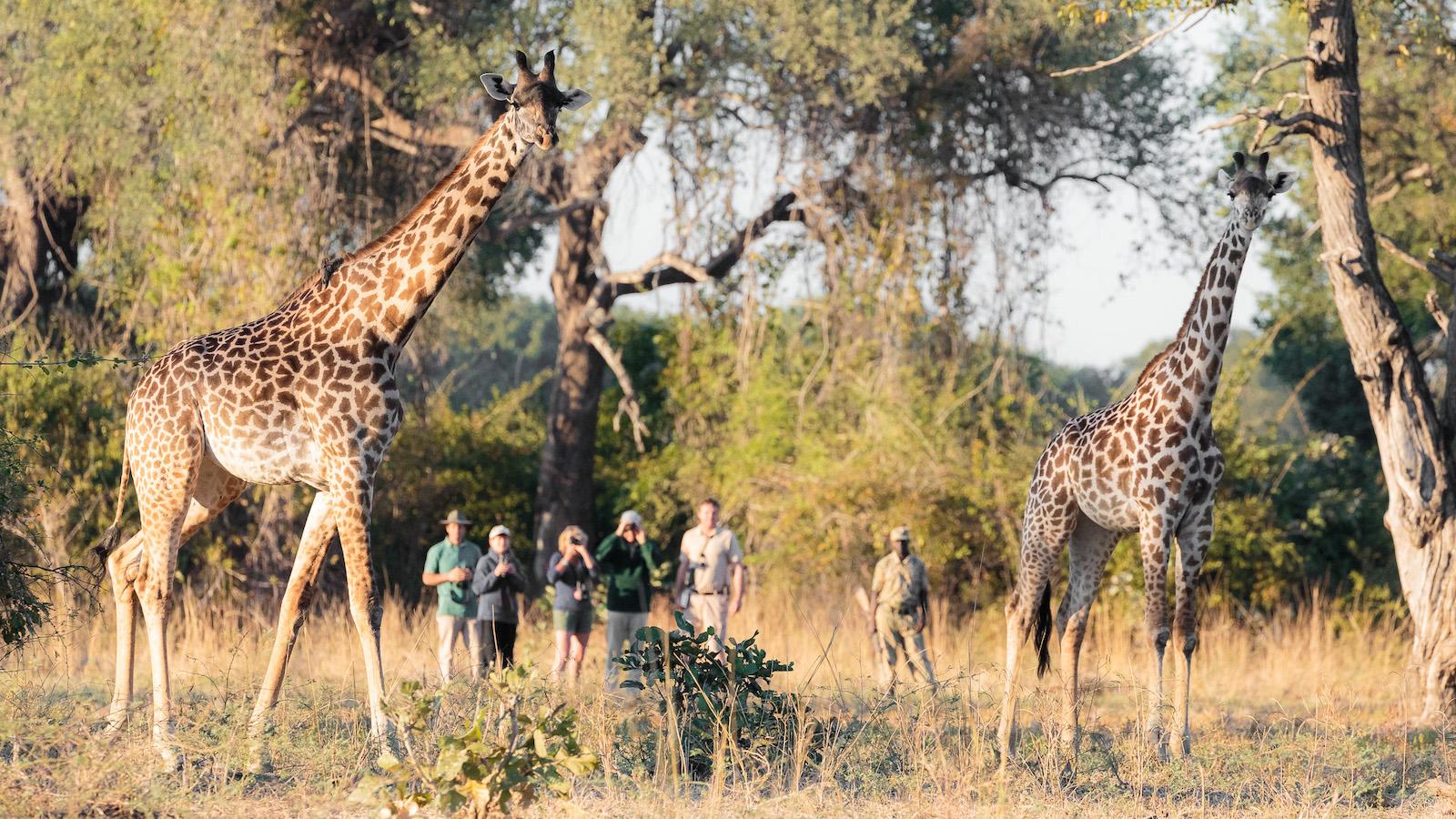 Gavin Opie Safaris Walking Safari 7