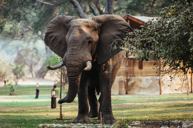 chongwe camp zambia-in-style-zambia-lodges-lower-zambezi-national-park-wildlife-photography-elephant