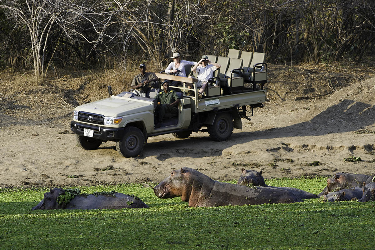 flatdogs-jackalberry-treehouse-crocodile-nest-zambia-in-style-south-luangwa-national-park-game-drive-hippos