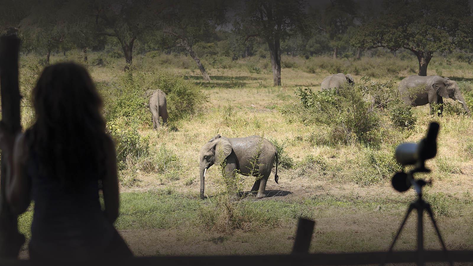 jackalberry-treehouse-ellies-flatdogs-zambia-in-style-south-luangwa-national-park