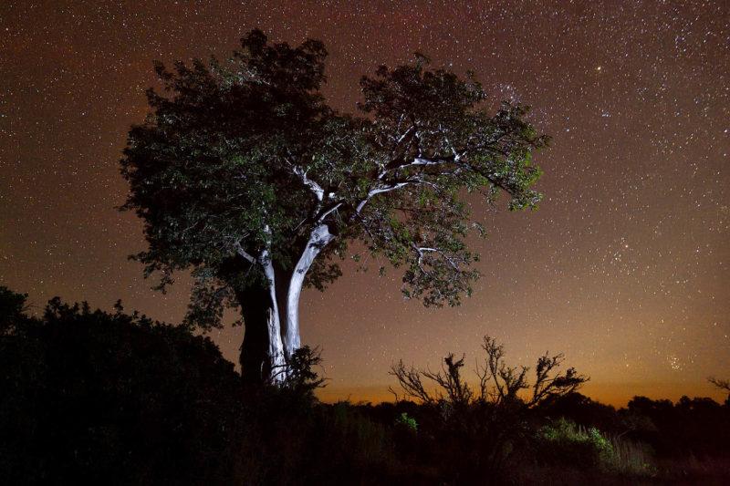 chilo gorge gonarezhou-national-park-zimbabwe-lodges-zambia-in-style-stars-and-boabab