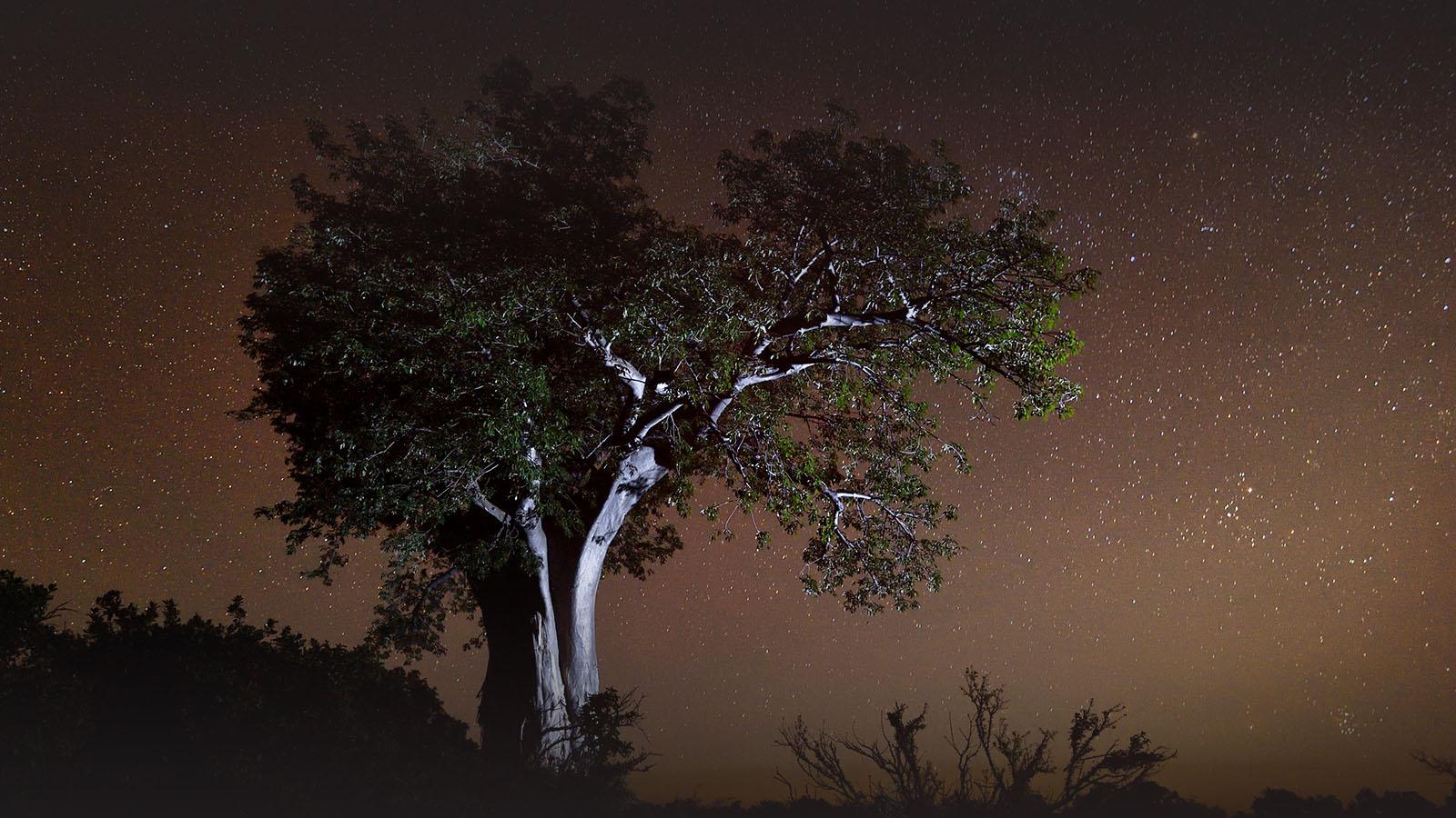 chilo gorge gonarezhou-national-park-zimbabwe-lodges-zambia-in-style-unique-landscape-culturebaobab