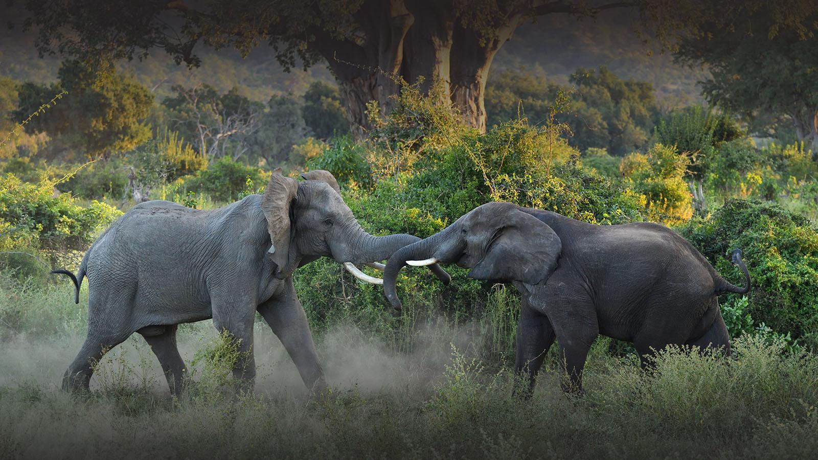 chilo gorge gonarezhou-national-park-zimbabwe-lodges-zambia-in-style-unique-landscape-cultureelephants
