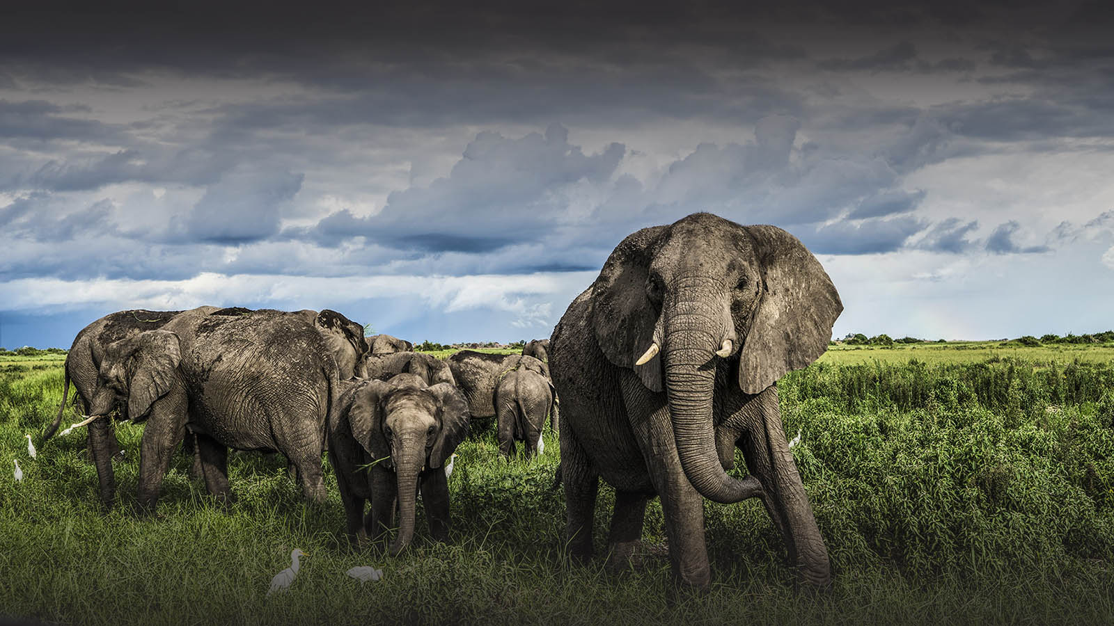 great plains duba explorers camp okavango-delta-botswana-lodges-zambia-in-style-safari-tents-wildlife-elephant-herd-scenic