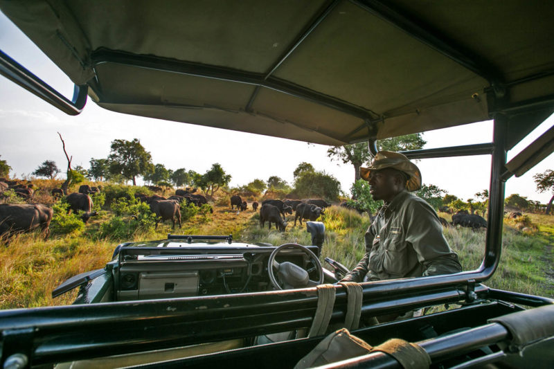 great plains duba explorers camp okavango-delta-botswana-lodges-zambia-in-style-stunning-safari-tents-wildlife-game-drive-elephants