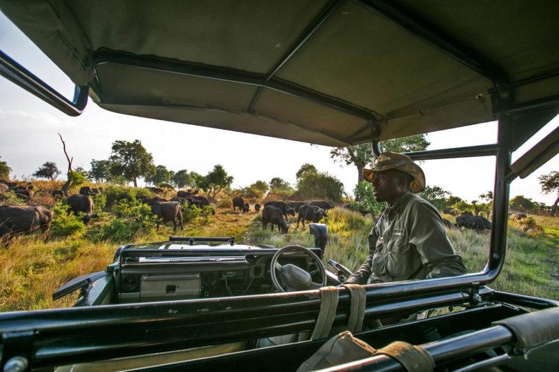 great plains duba explorers camp okavango-delta-botswana-lodges-zambia-in-style-stunning-safari-tents-wildlife-game-drive-elephants