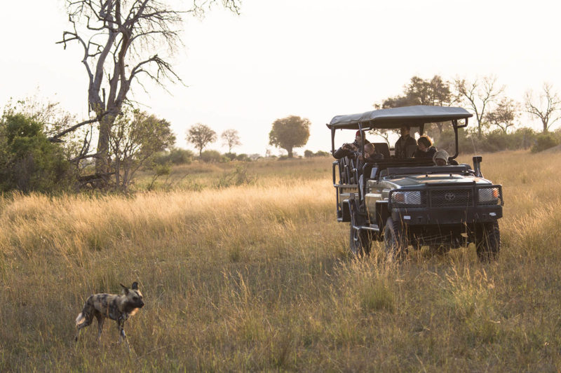 great plains duba explorers camp okavango-delta-botswana-lodges-zambia-in-style-stunning-safari-tents-wildlife-wild-dog-game-drive-sunset