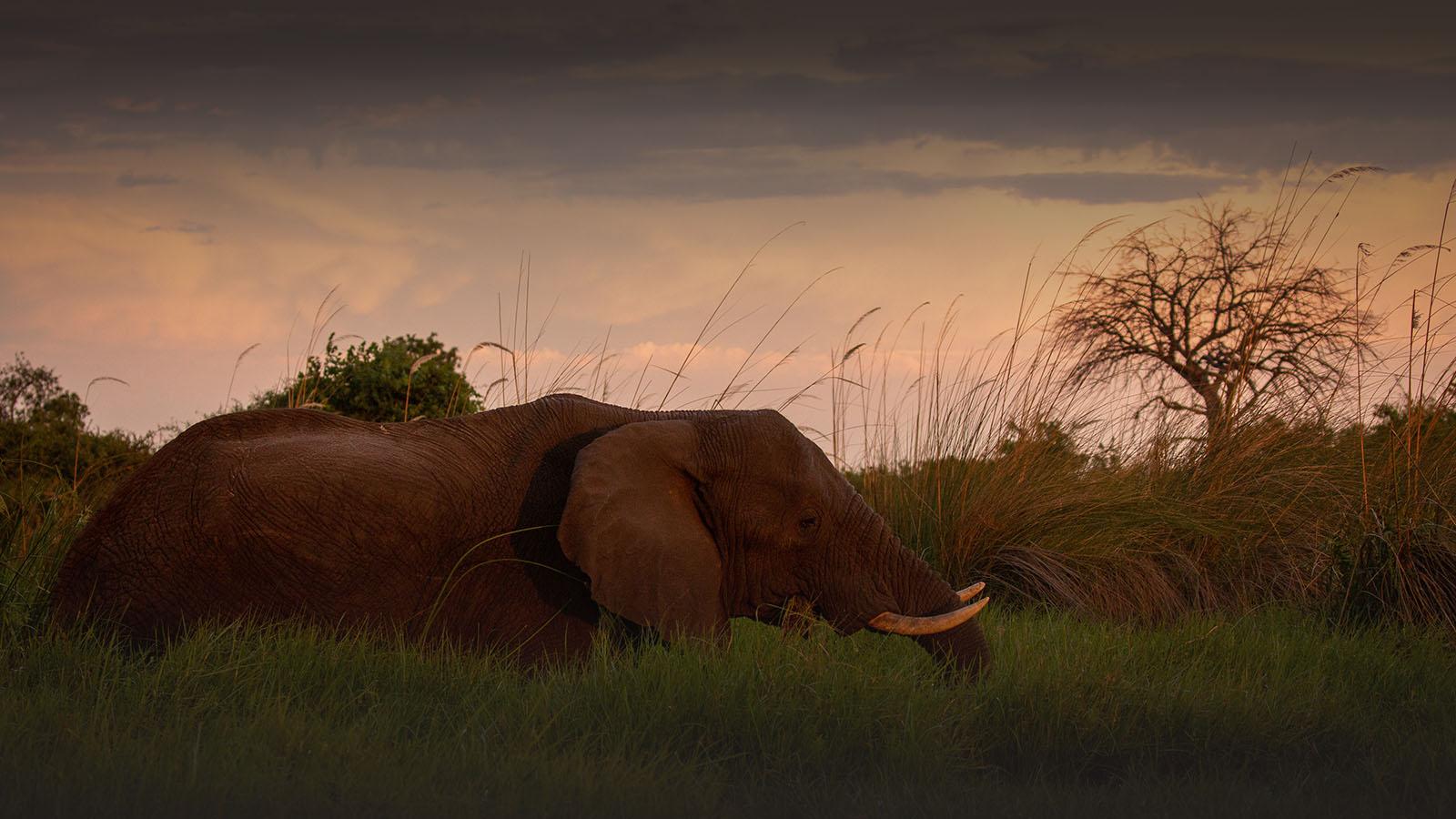 great plains duba plains camp duba-plains-suite-okavango-delta-botswana-lodges-zambia-in-style-luxury-wildlife-elephant