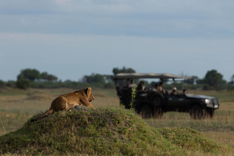 great plains duba plains camp duba-plains-suite-okavango-delta-botswana-lodges-zambia-in-style-private-luxury-incredible-views-lion-cub-game-drive