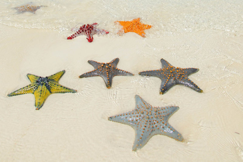 the z hotel tanzania-lodges-north-zanzibar-best-beaches-sea-star-starfish-in-sand