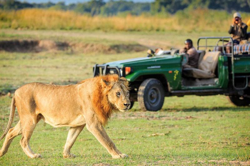 thornicroft lodge south-luangwa-mfuwe-area-zambia-in-style-lion-safari